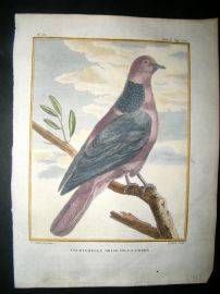 Sonnerat India 1782 Antique Hand Col Print. Chinese Red Turtle Dove